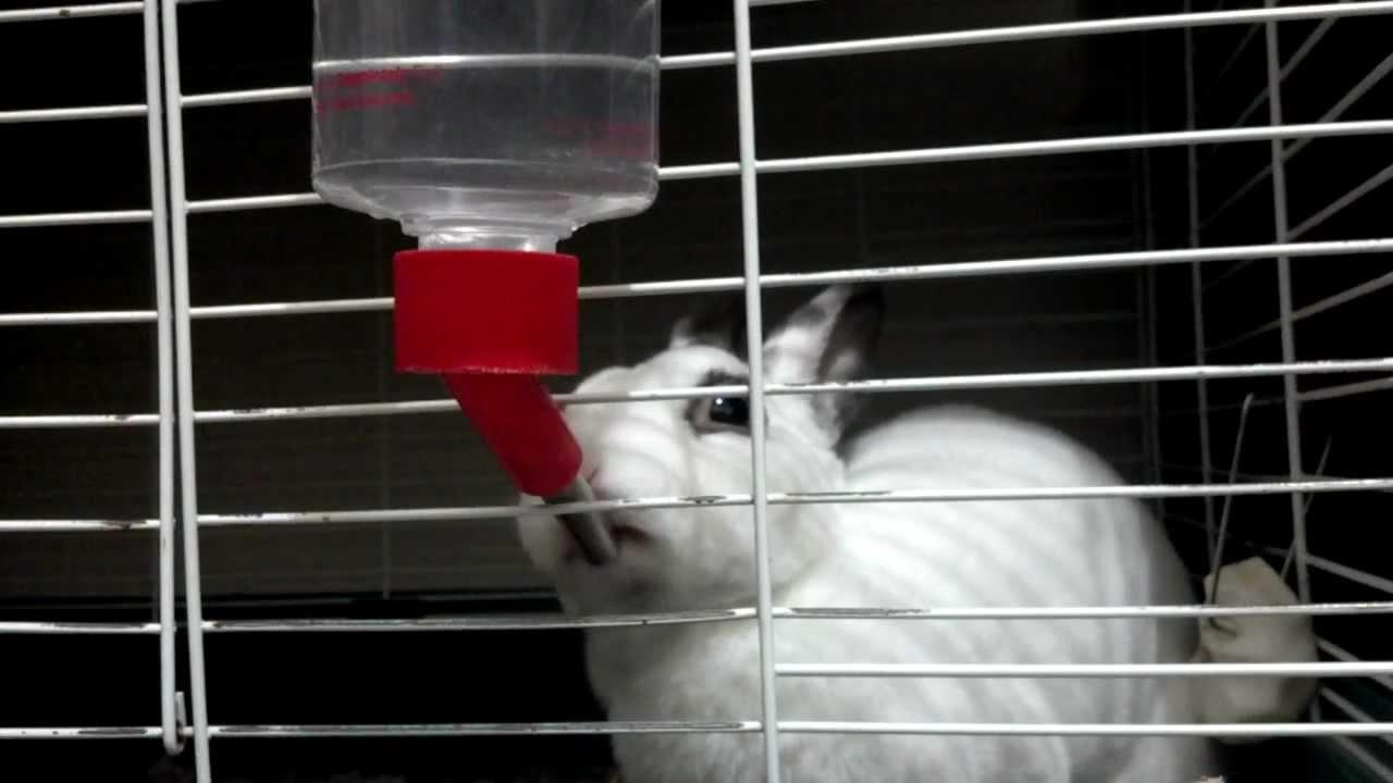 кролик пьет из поилки