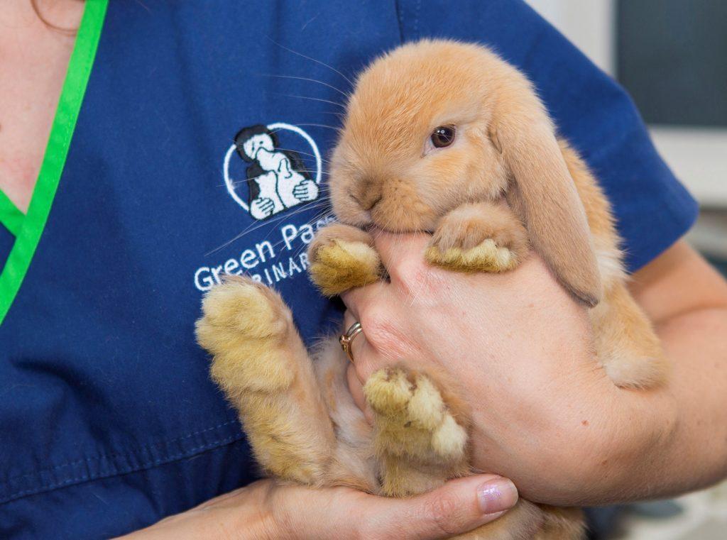 Опухоли у кроликов