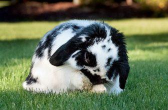 Почему домашние кролики плохо пахнут