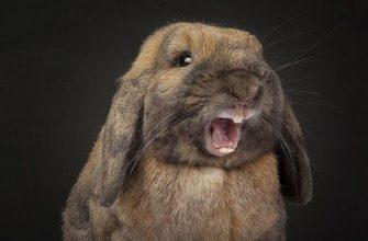 Почему кусается кролик - главное фото