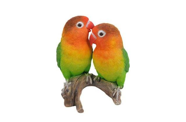 Попугаи-неразлучники - парочка
