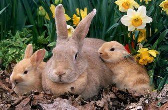 Причины каннибализма у кроликов - главное фото