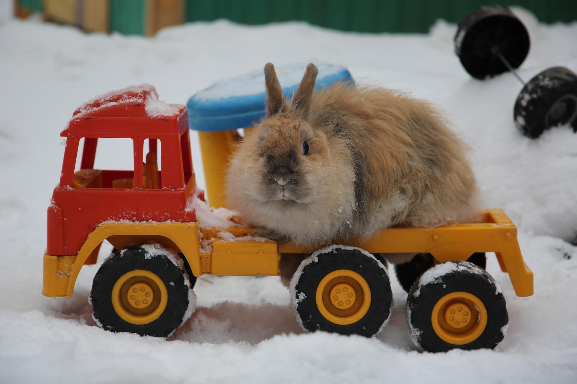кролик на машине