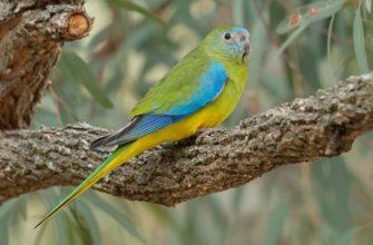 Травяные попугаи - главное фото