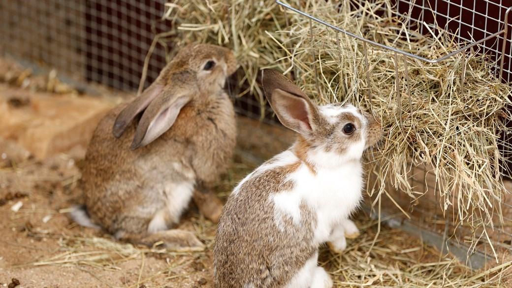 кролик возле кормушки