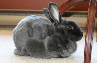 У кроликов выпадает шерсть - главное фото