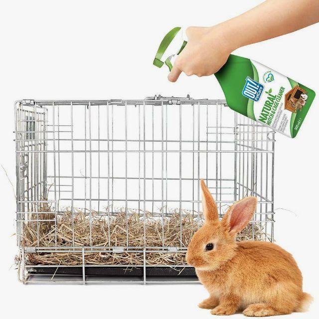 Как победить миксоматоз у кроликов