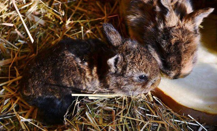 кролики пьют молоко