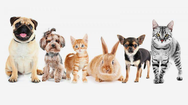 Задайте вопрос ветеринару - информация о питомце