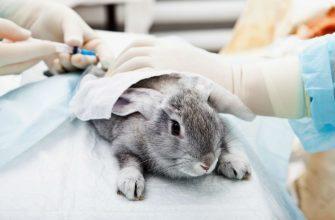 Бешенство у кроликов - главное фото