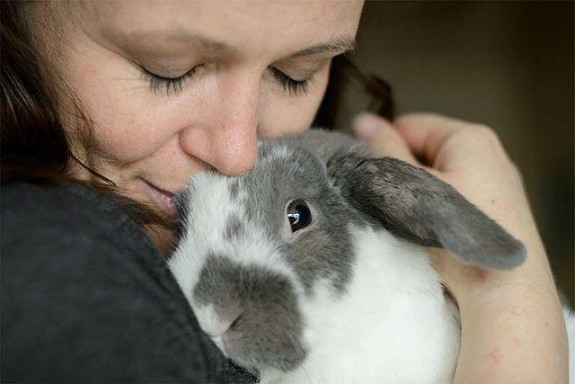 Приучение кролика к рукам