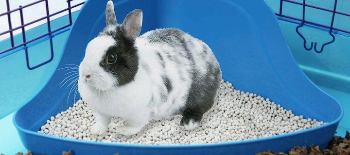 Приучение кролика к туалету