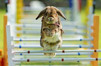 Дрессировка кролика - главное фото