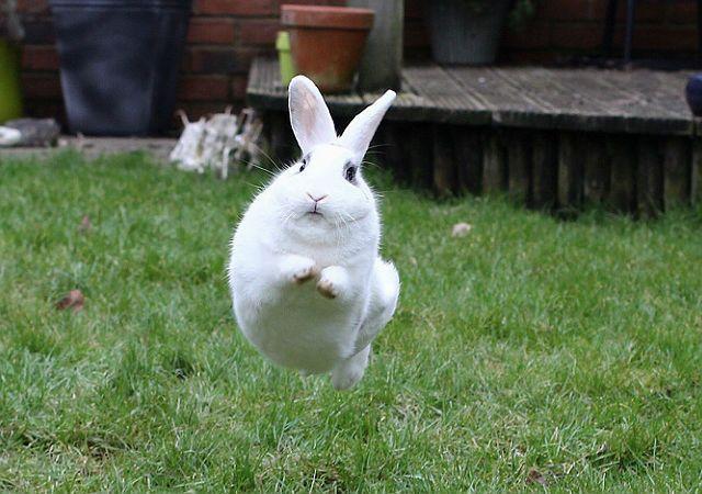 """Дрессировка кролика - команда """"Ко мне!"""""""