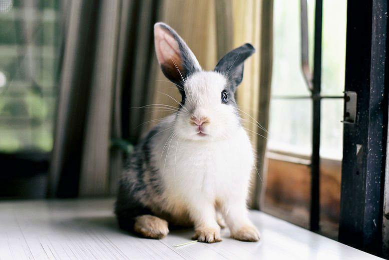 Дрессировка кролика - правила