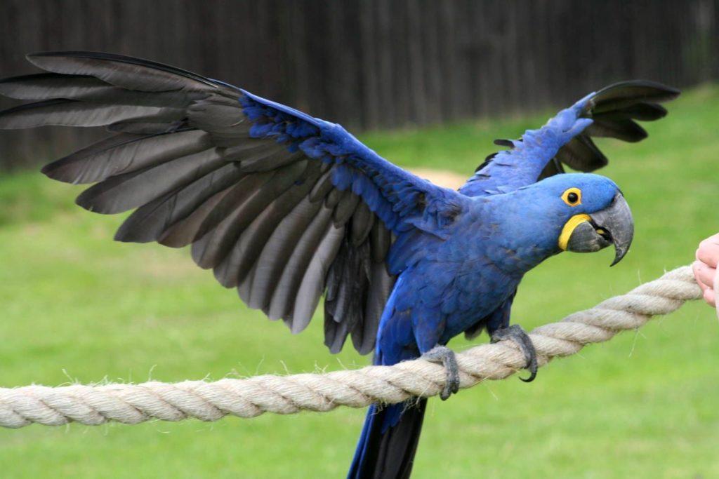 Топ самых дорогих и редких попугаев в мире
