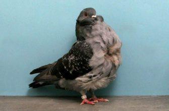 Голуби чайки - главное фото