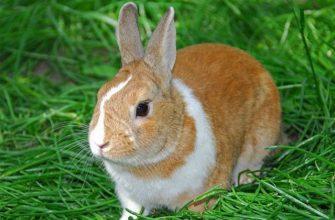 Имена для кроликов - главное фото