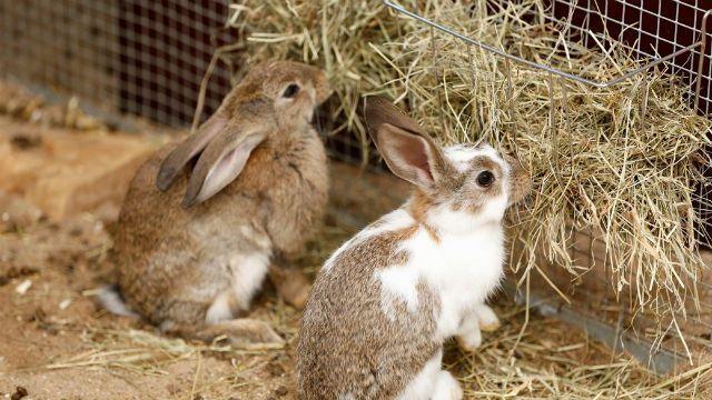 Имена для кроликов по окрасу