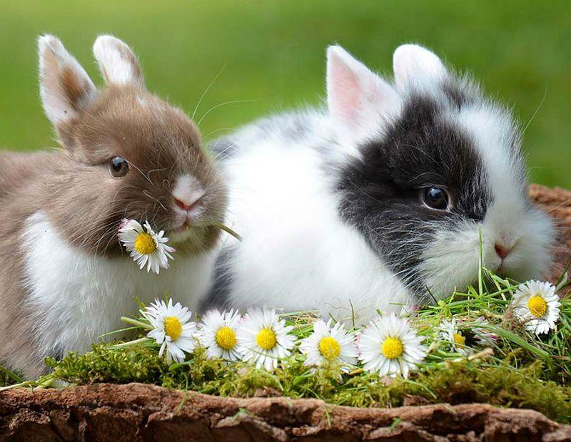 Имена для породистых кроликов