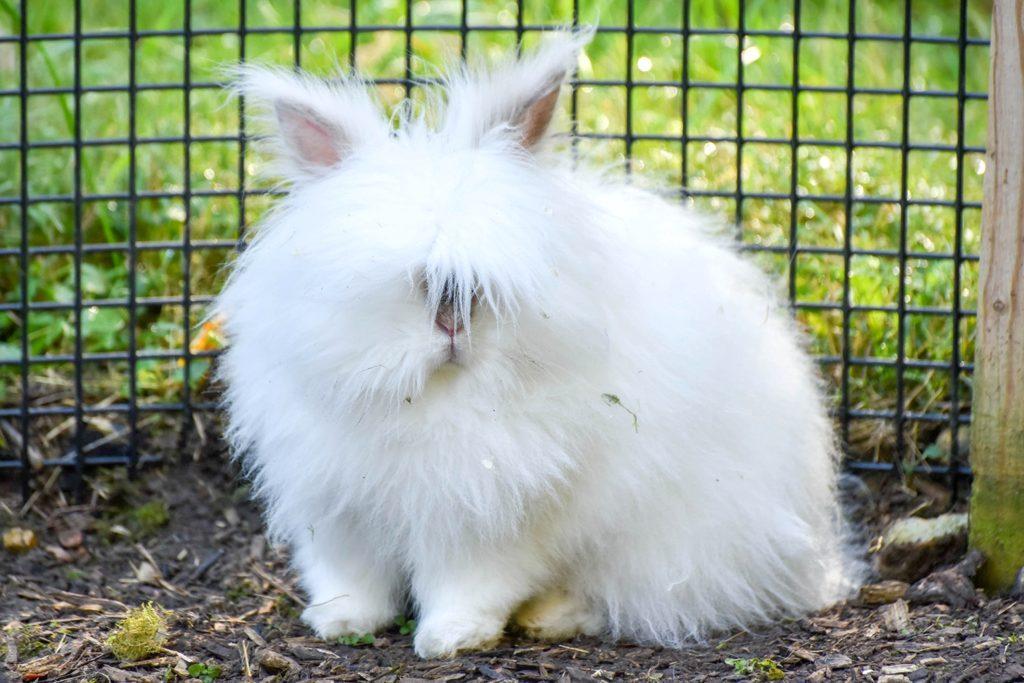 Оригинальные и смешные клички для кроликов
