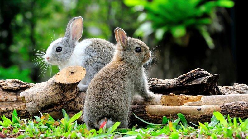 Как подобрать имя для кролика (1)