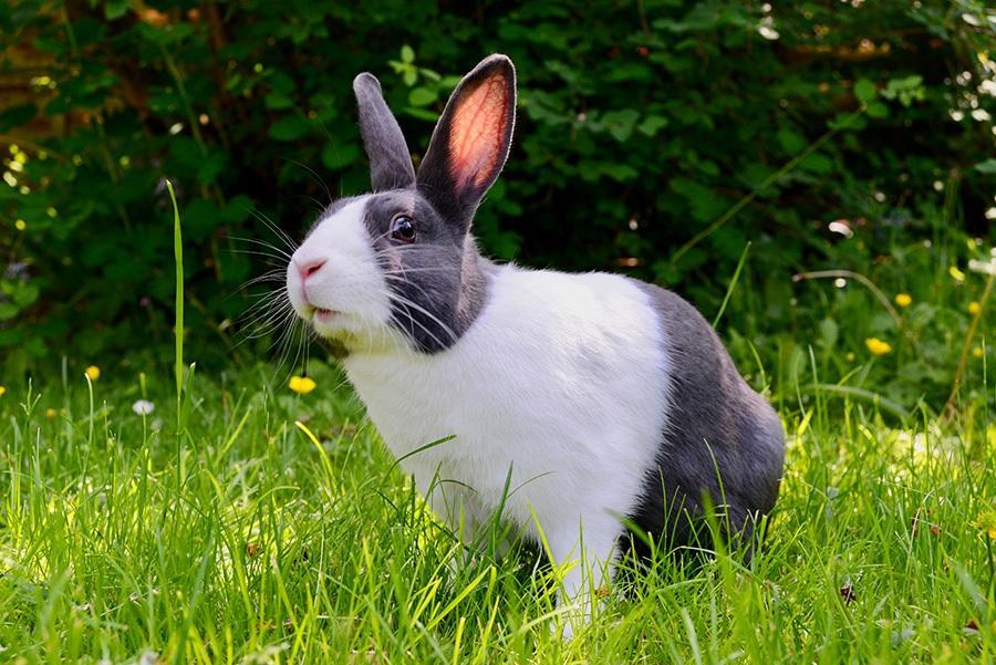 Как выбрать имя кролику