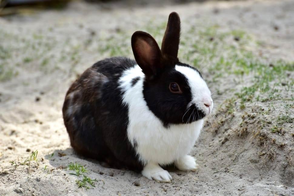 Кролики с белым, черным и рыжим окрасом