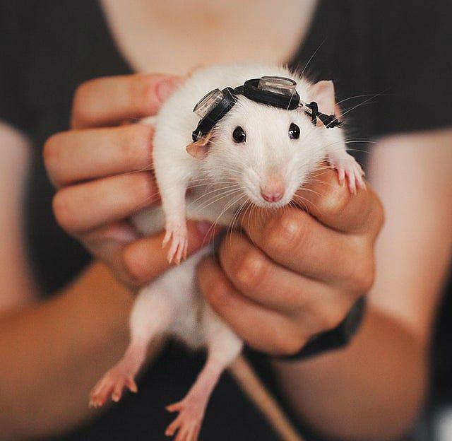 Мальчик-крыса