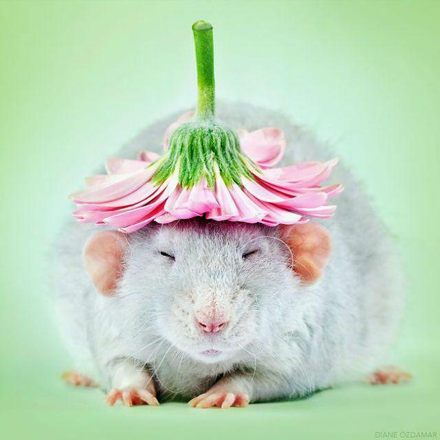 Крыса-девочка