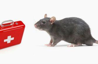 Лекарства для лечения крыс - главное фото