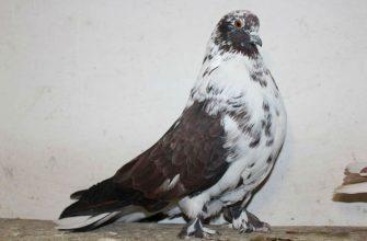 Мелитопольские голуби - главное фото