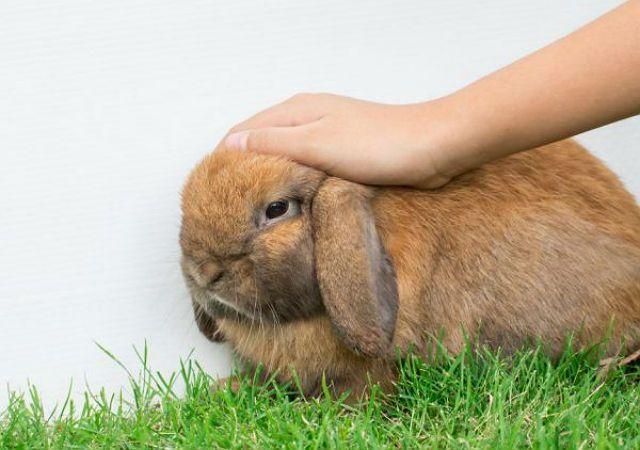 Микоплазмоз у кролика - профилактика