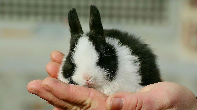 Микоплазмоз у кролика - главное фото