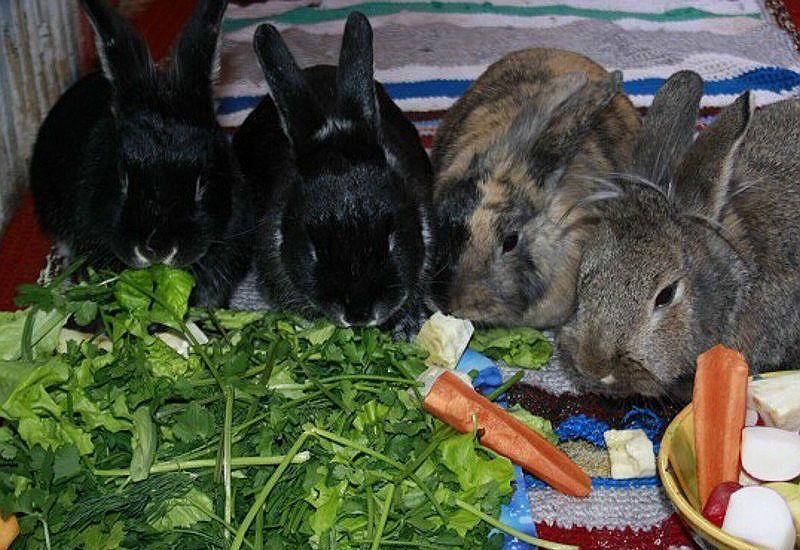 Ботва для кроликов
