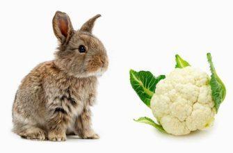 Овощи кроликам - главное фото