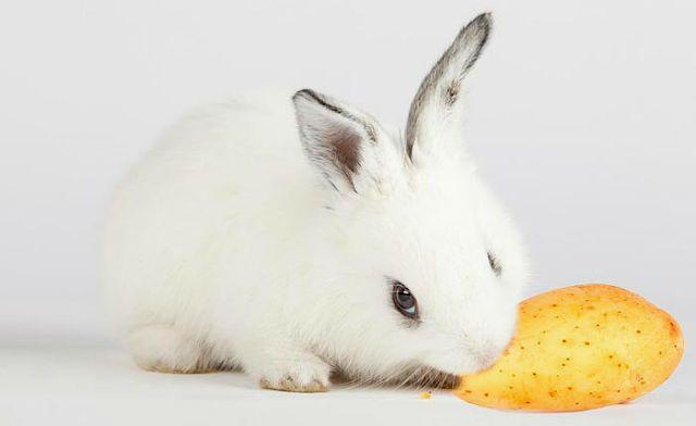 Вареный картофель для кролика