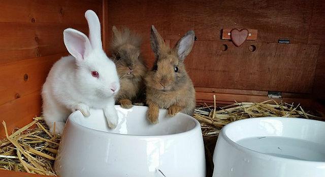 Кролики у поилки
