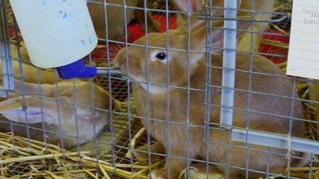 Поилка в клетке у кролика