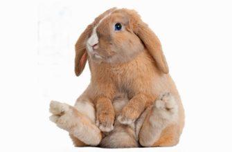 Понос у кроликов - главное фото
