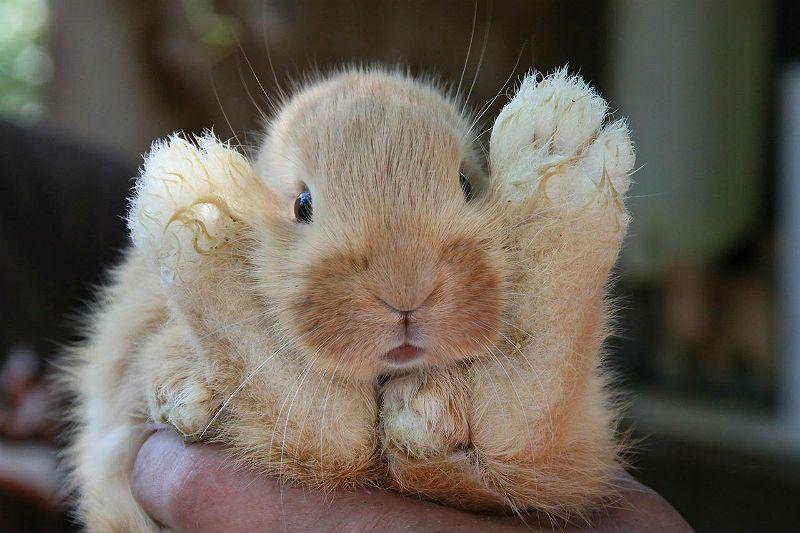 Как вовремя распознать и лечить пастереллез у кроликов