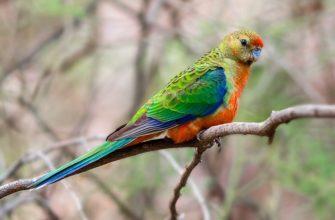 Попугаи с красивым оперением