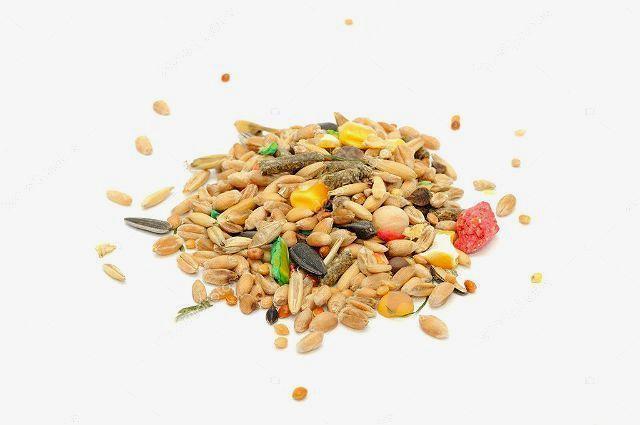 Продукты для джунгарика - зерновые смеси