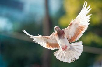 Спортивные голуби - главное фото