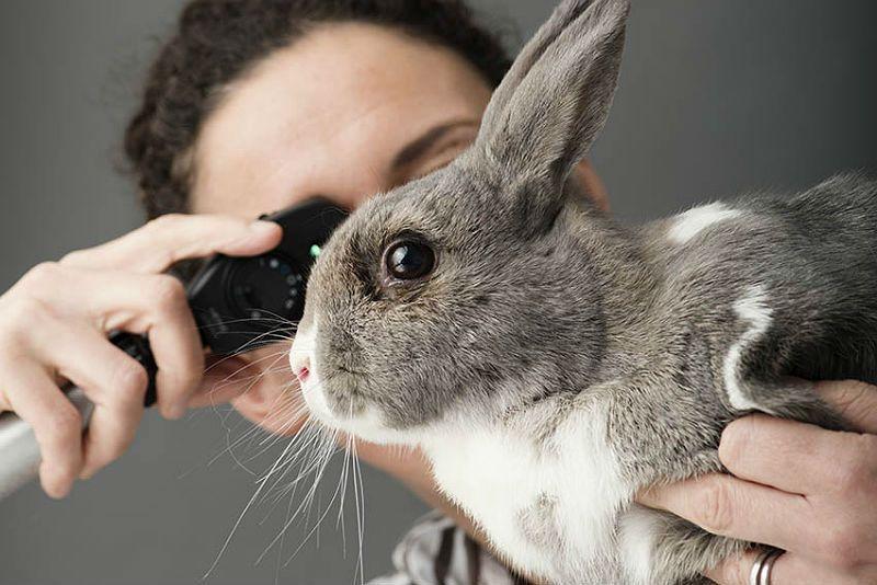 Ушной клещ у кроликов - главное фото