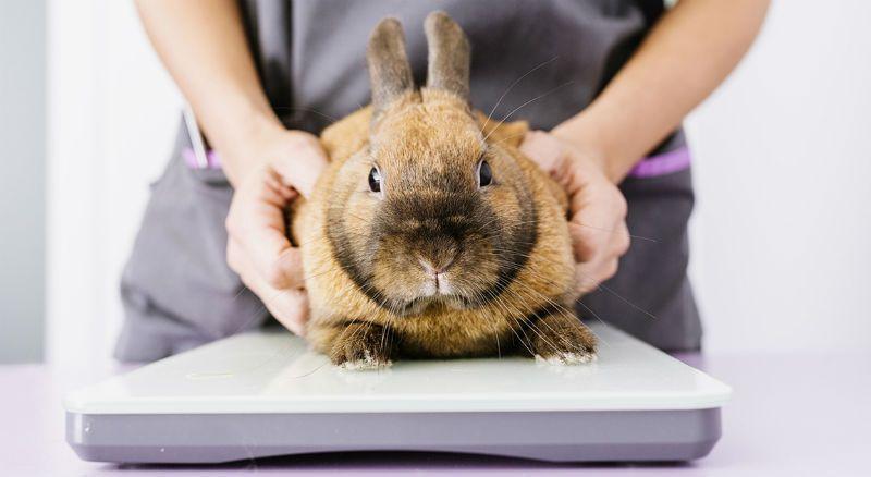 Вес кроликов - главное фото