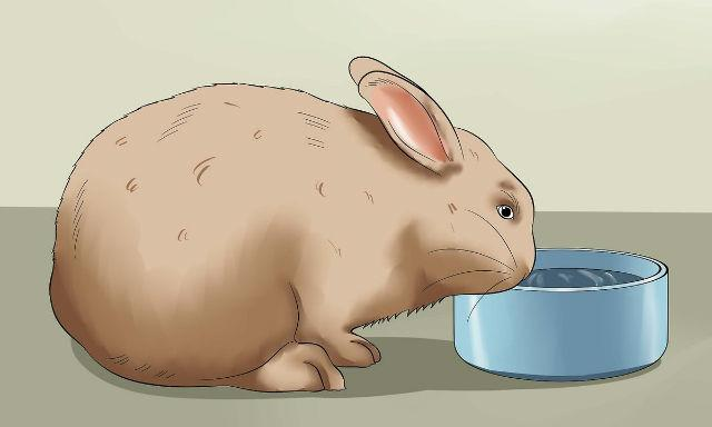 Йод для домашних кроликов - как разводить