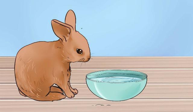 Йод для домашних кроликов - правила выпаивания