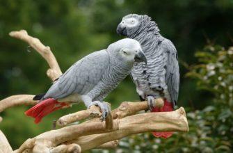Жако попугай - главное фото