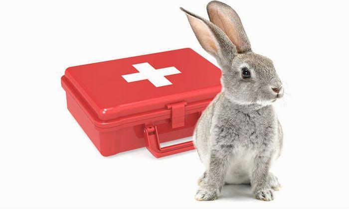 Аптечка для кроликов - главное фото